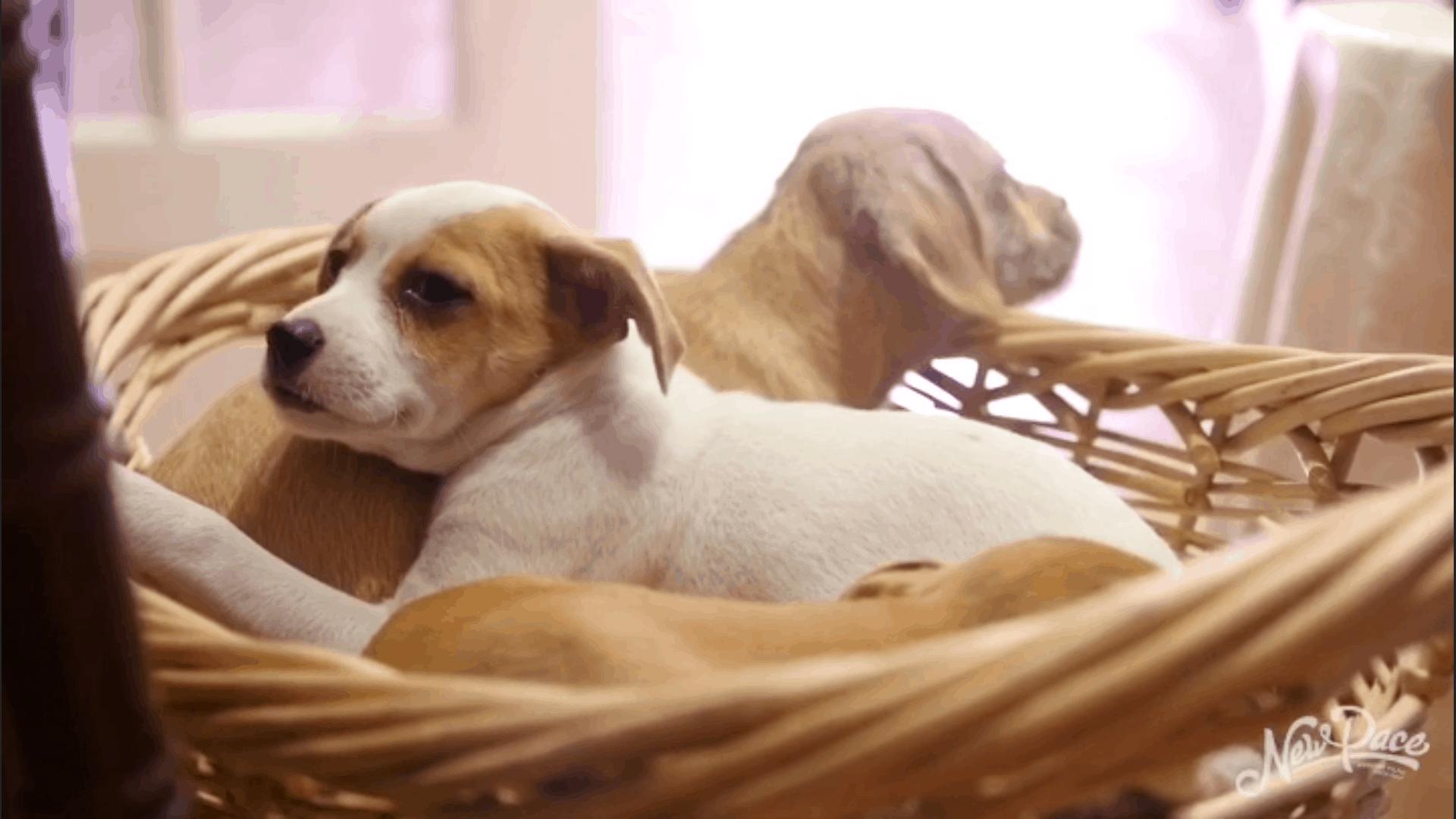 Puppy-Gram!